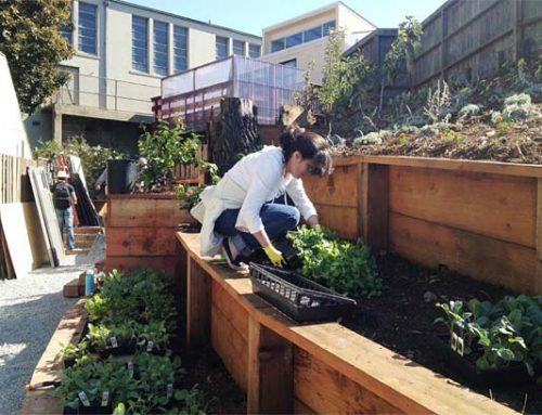 Mission YMCA Edible Garden
