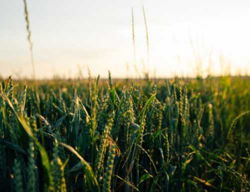 Crop Diversity Can Buffer the Effects of Climate Change
