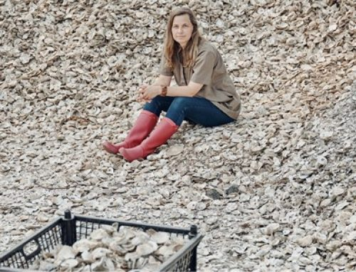 The Seas Are Rising. Could Oysters Help?